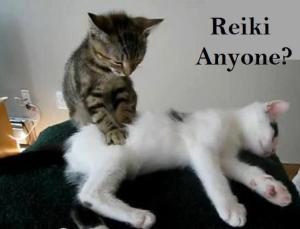 reiki-cat